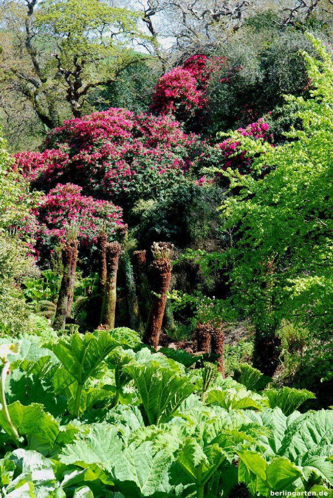 Üppige Vegetation Dschungel