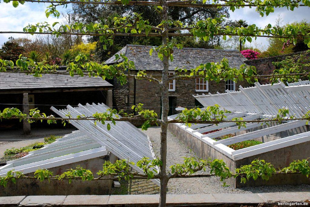Anzuchthäuser für Ananas