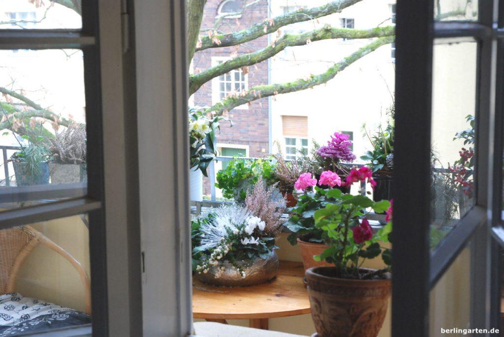 Mein Balkon im Januar 2018: eine wilde Mischung aus Sommer, Herbst & Winter