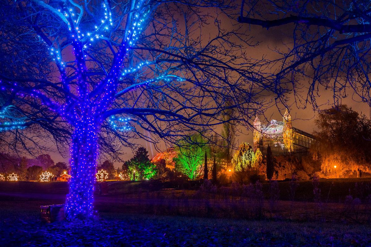 ChristmasGarden_TanzendeBaeume_MichaelClemens