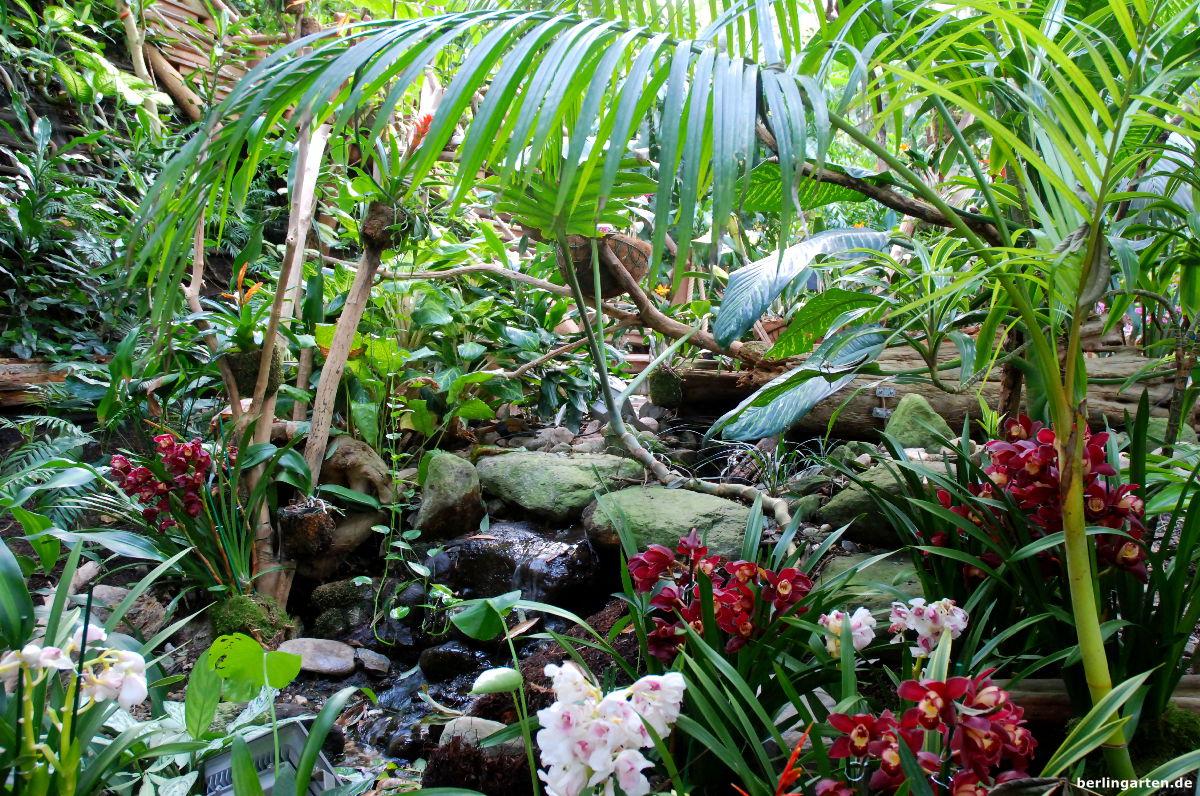 orchideenpflege richtig gemacht tipps vom profi der. Black Bedroom Furniture Sets. Home Design Ideas