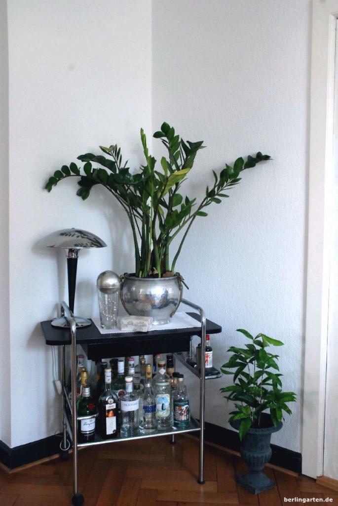 Dunkle Zimmerpflanzenecke mit Zamioculcas und Dracaena surculosa