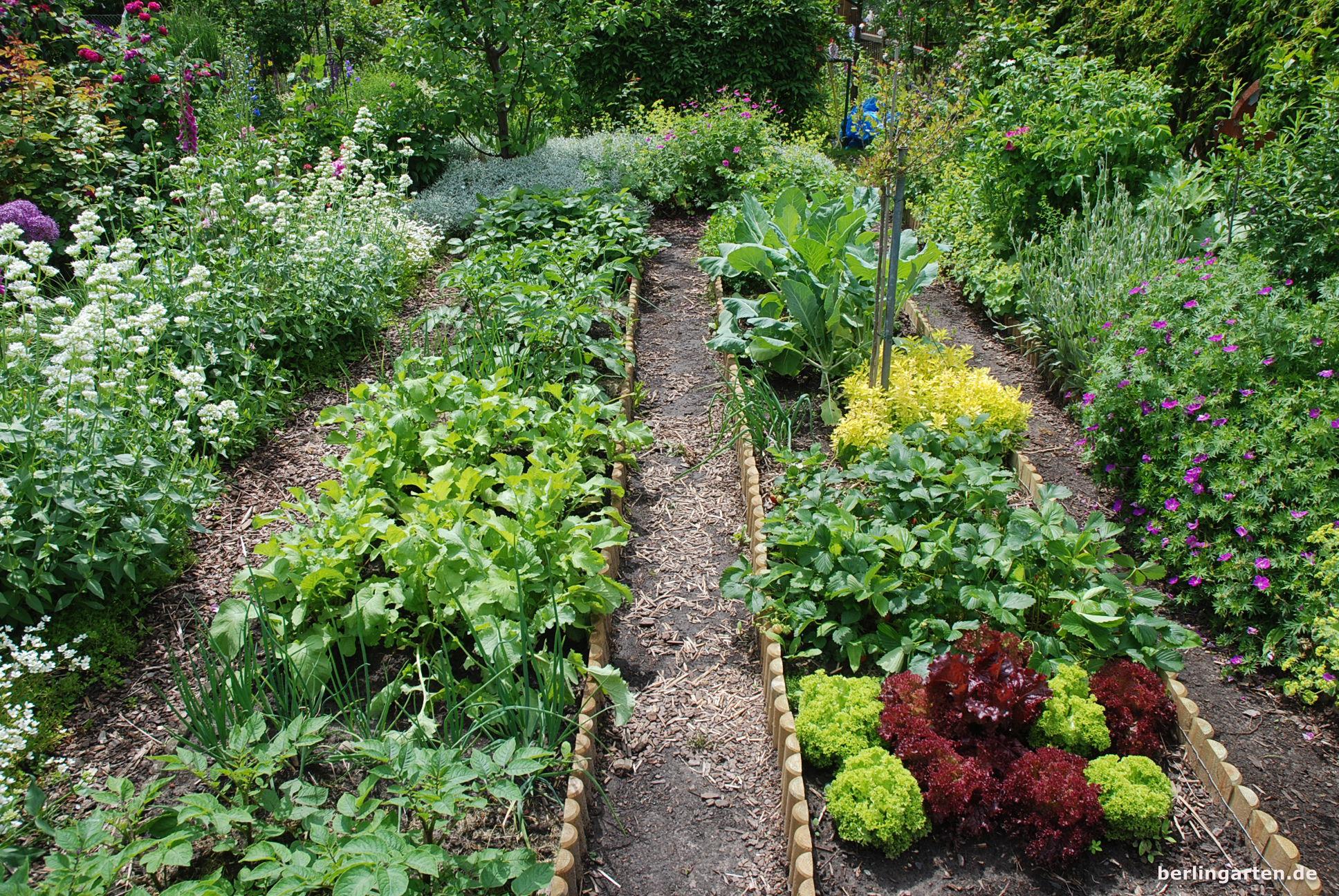 Immer Genau Die Richtige Portion: Salate Aus Dem Eigenen Garten ... Frische Salate Eigenen Garten Ernten