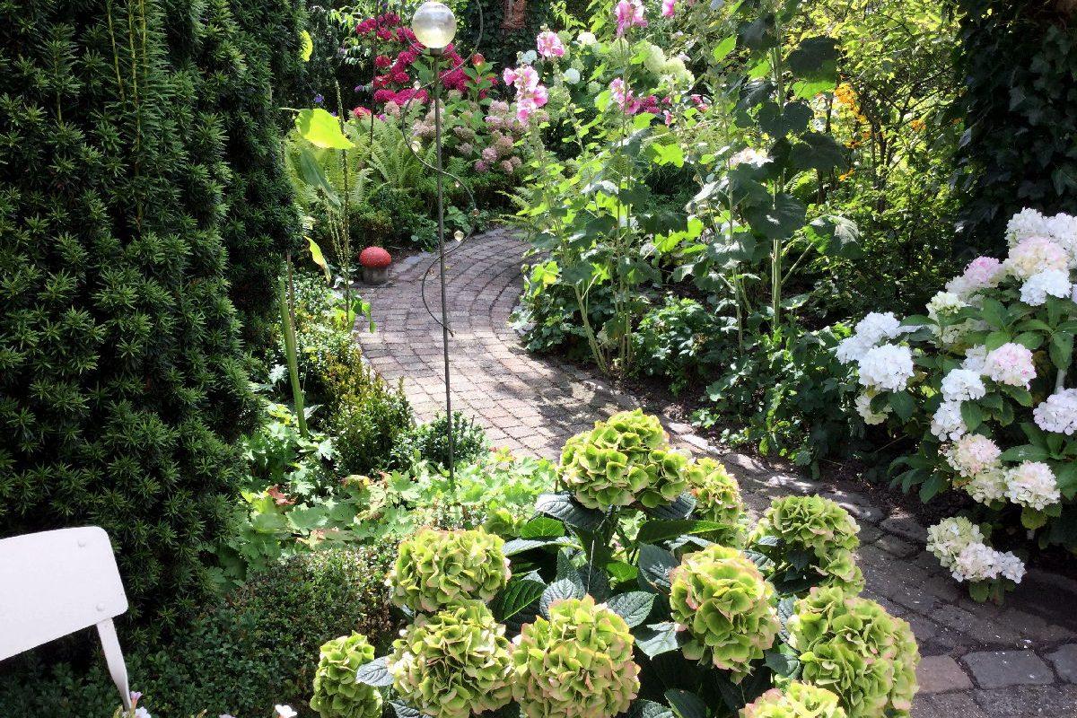 Geschwungene Wege durch Tetsjes Hortensiengarten