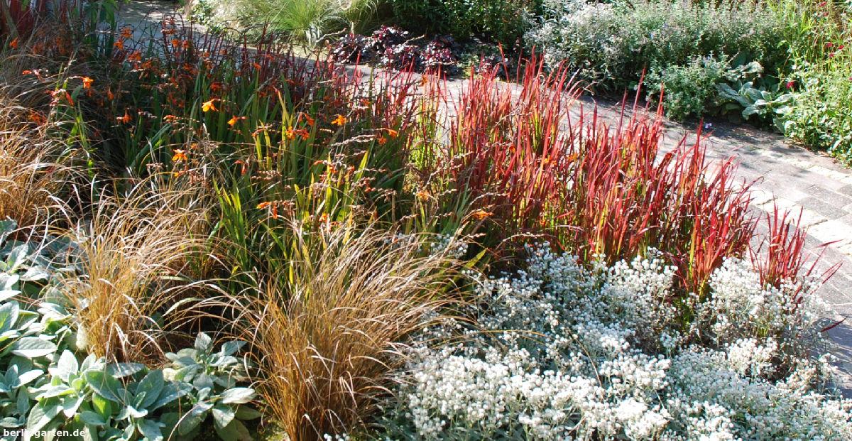 Gräser Carex comans 'Bronze Form' und Imperata cylindrica 'Red Baron'