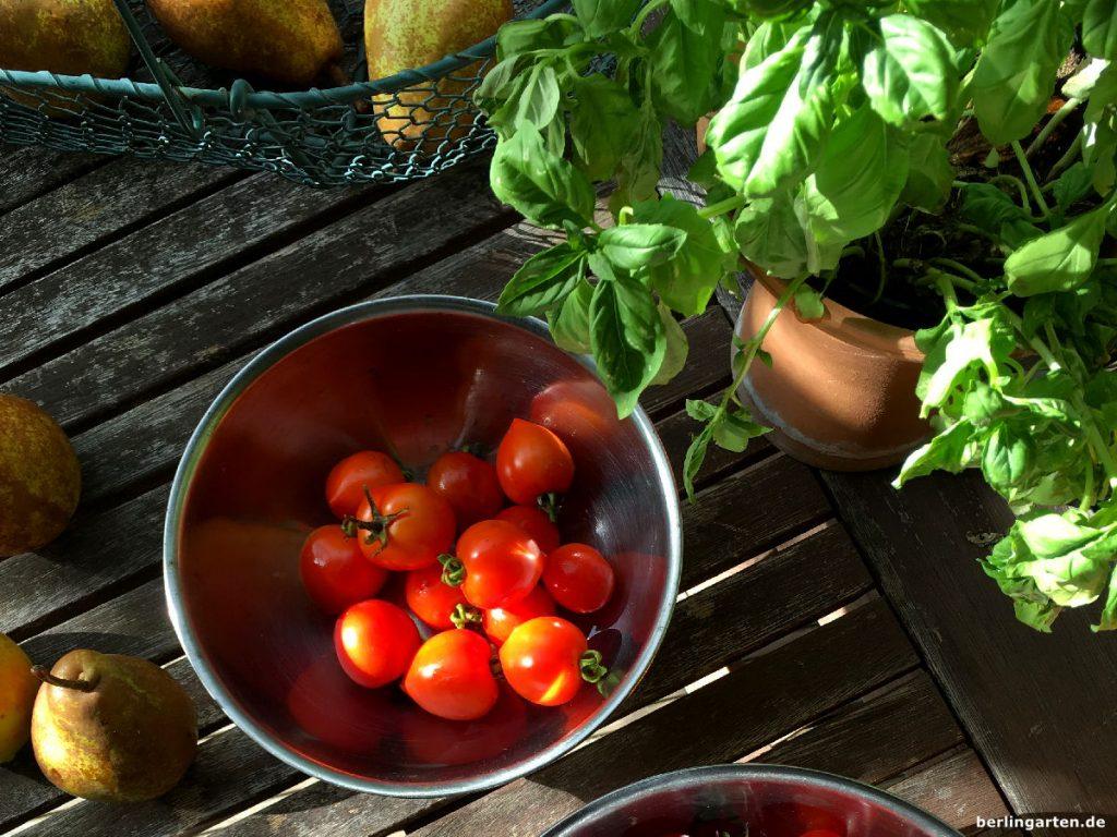 tomaten im topf lieblinge black cherry und heartbreaker berlingarten. Black Bedroom Furniture Sets. Home Design Ideas