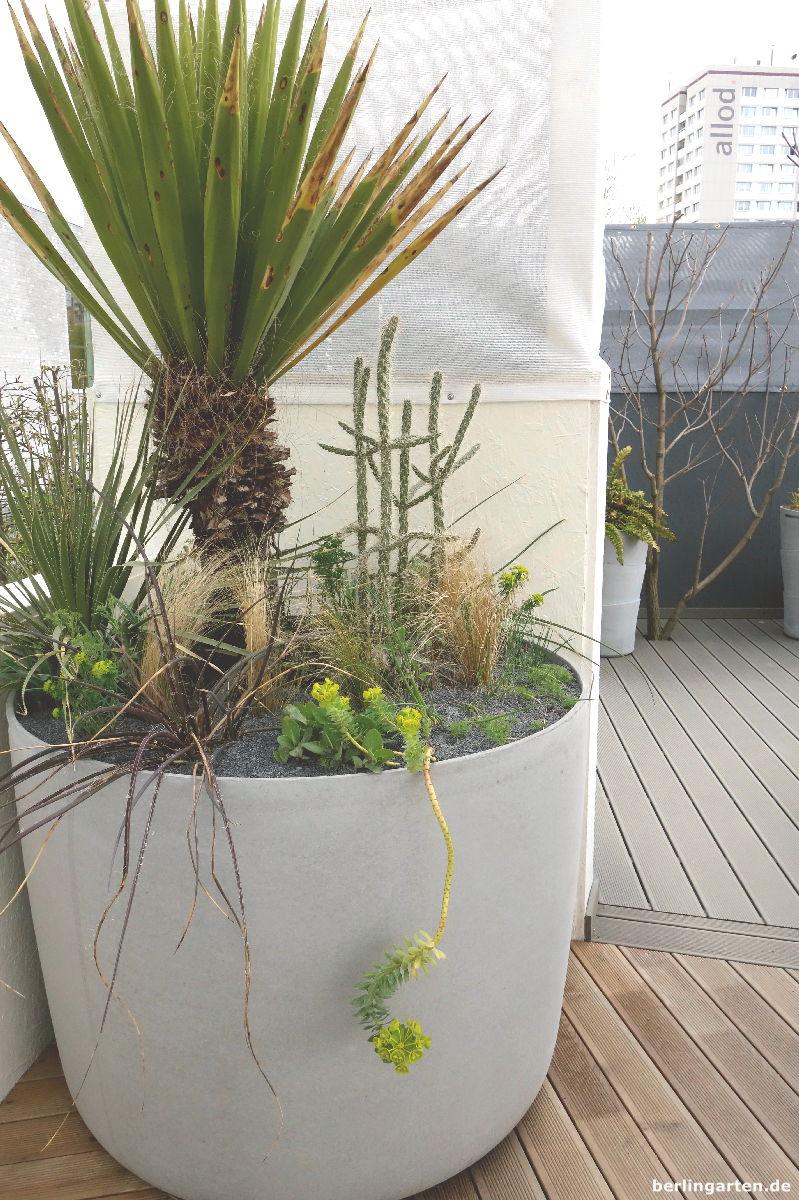 Balkonkübel mal anders - und gießextensiv