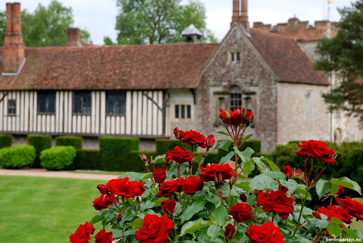 Ightham rote Rose