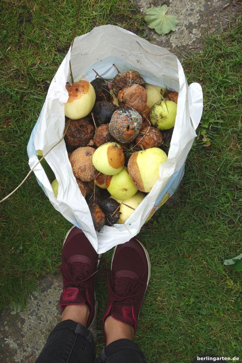 Klaräpfel Monilia