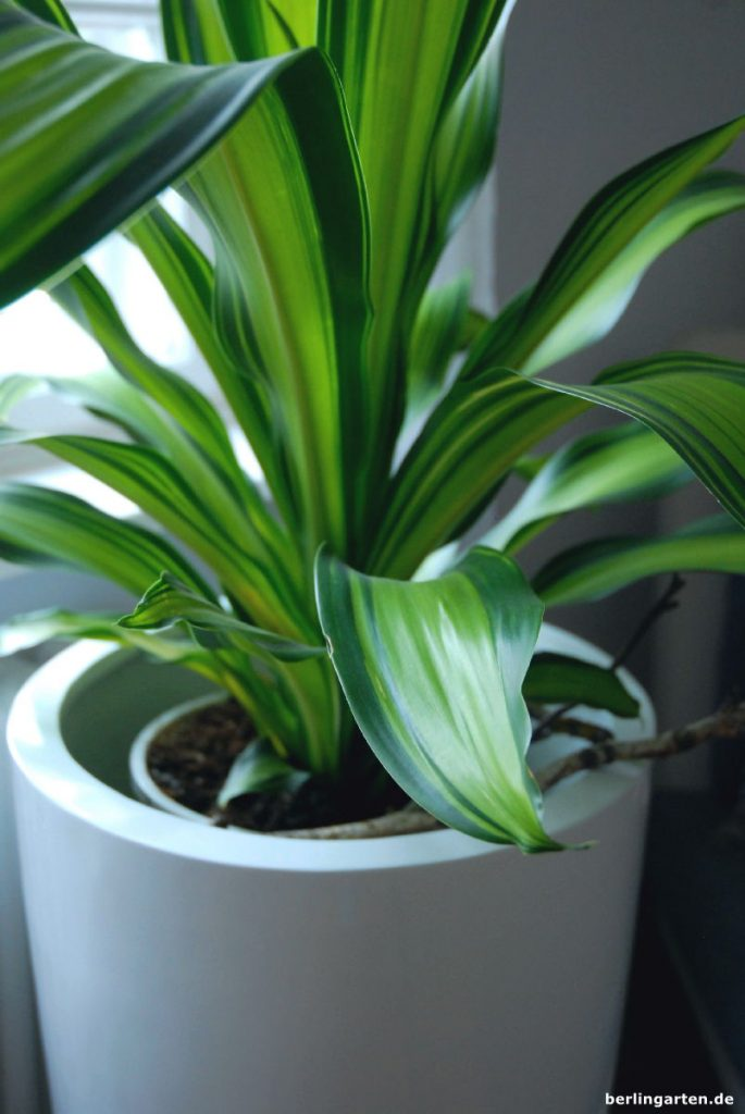 zimmerpflanzen tipps f r den schatten tolle pflanzen und schicke k bel. Black Bedroom Furniture Sets. Home Design Ideas