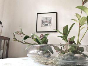 Mein Moribana in der Glasschale
