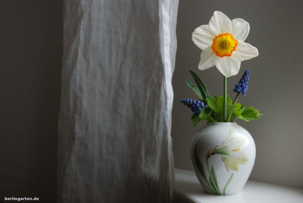 Narzisse in KPM-Vase