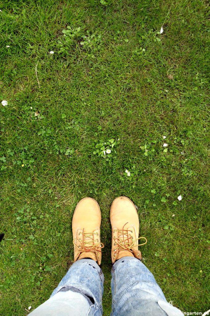 Rasen Klee Gänseblümchen