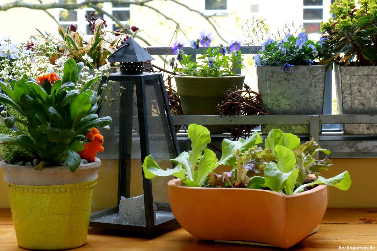 salat auf balkon berlingarten. Black Bedroom Furniture Sets. Home Design Ideas