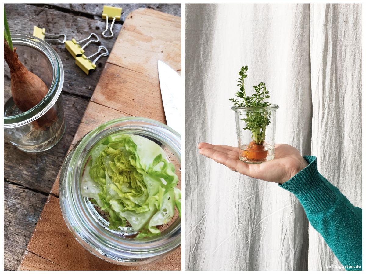 Titel Gemüse antreiben