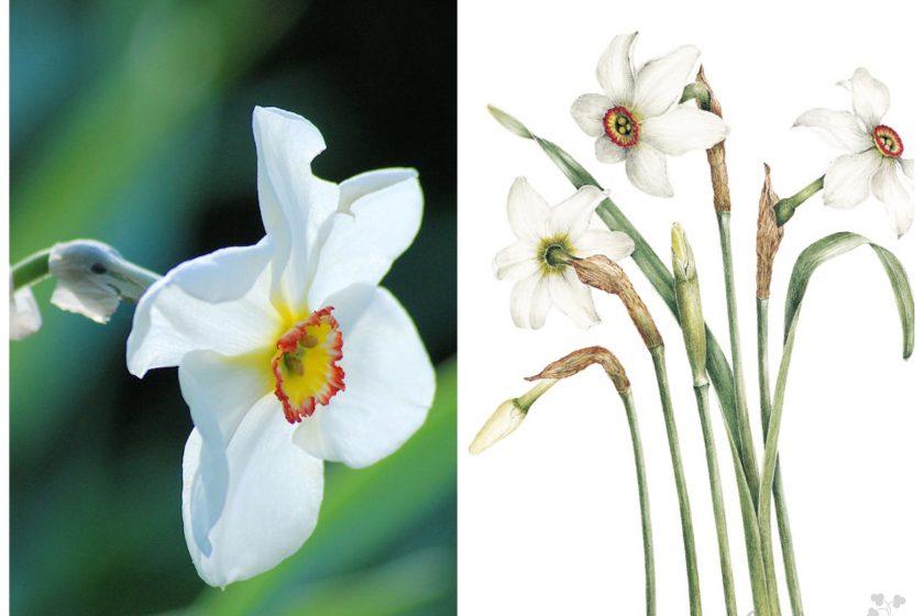 Titel Highgrove-Florilegium