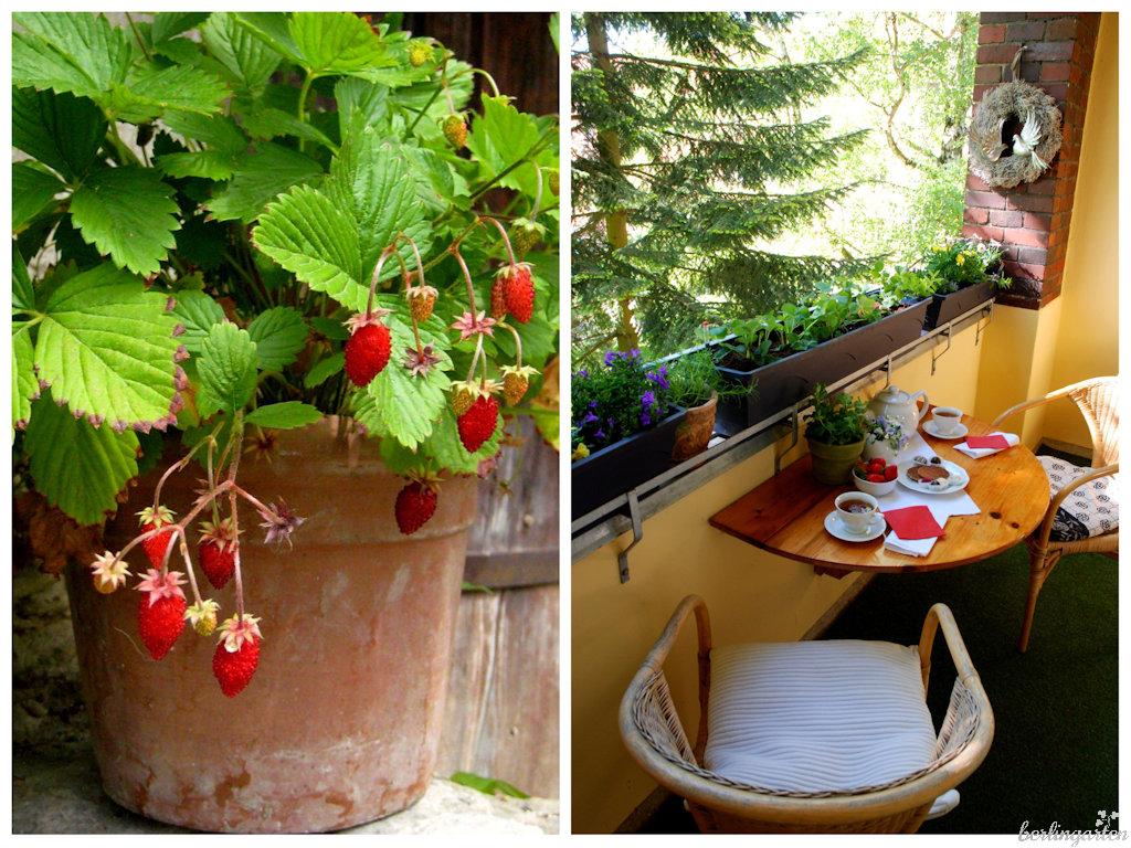 erdbeeren auf balkon und terrasse in topf kasten k bel. Black Bedroom Furniture Sets. Home Design Ideas