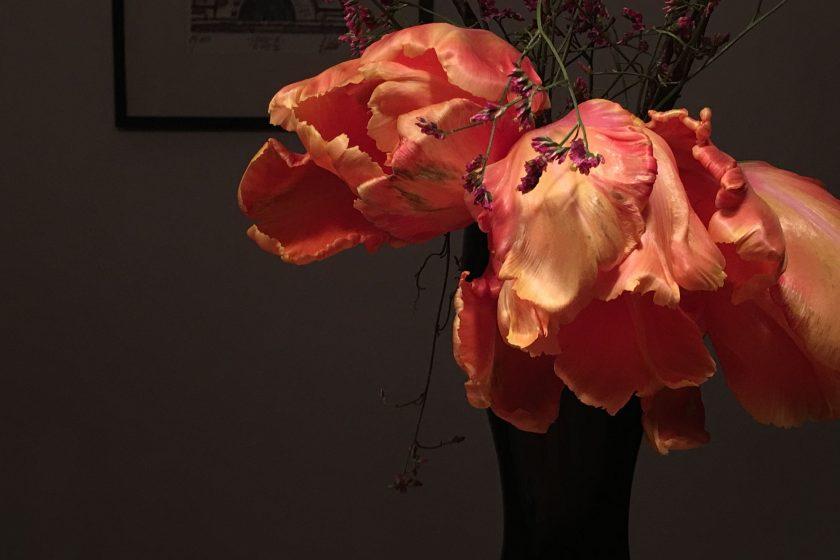 Tulpen meine Leidenschaft