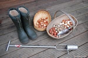 Werkzeuge zum Zwiebelsetzen