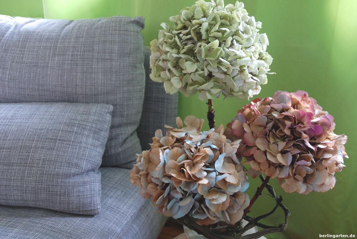 getrocknete hortensien mit spr hlack wieder farblichen pepp geben. Black Bedroom Furniture Sets. Home Design Ideas