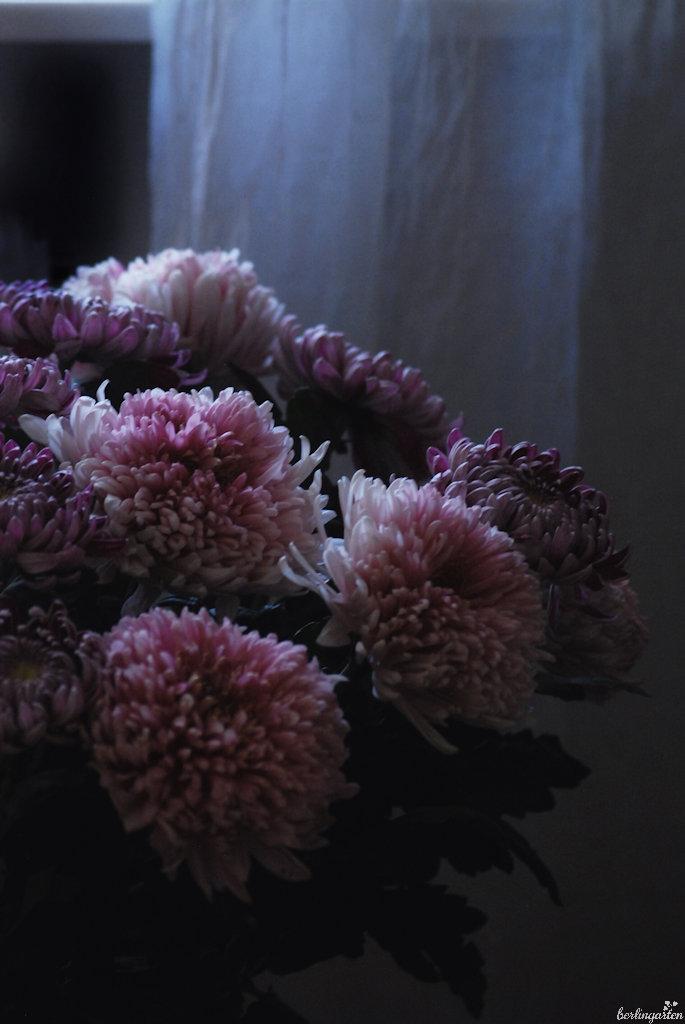 Großblütige Chrysanthemen in der Vase: mehr ist mehr