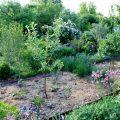 Dynamischer Agroforst Mitte Mai