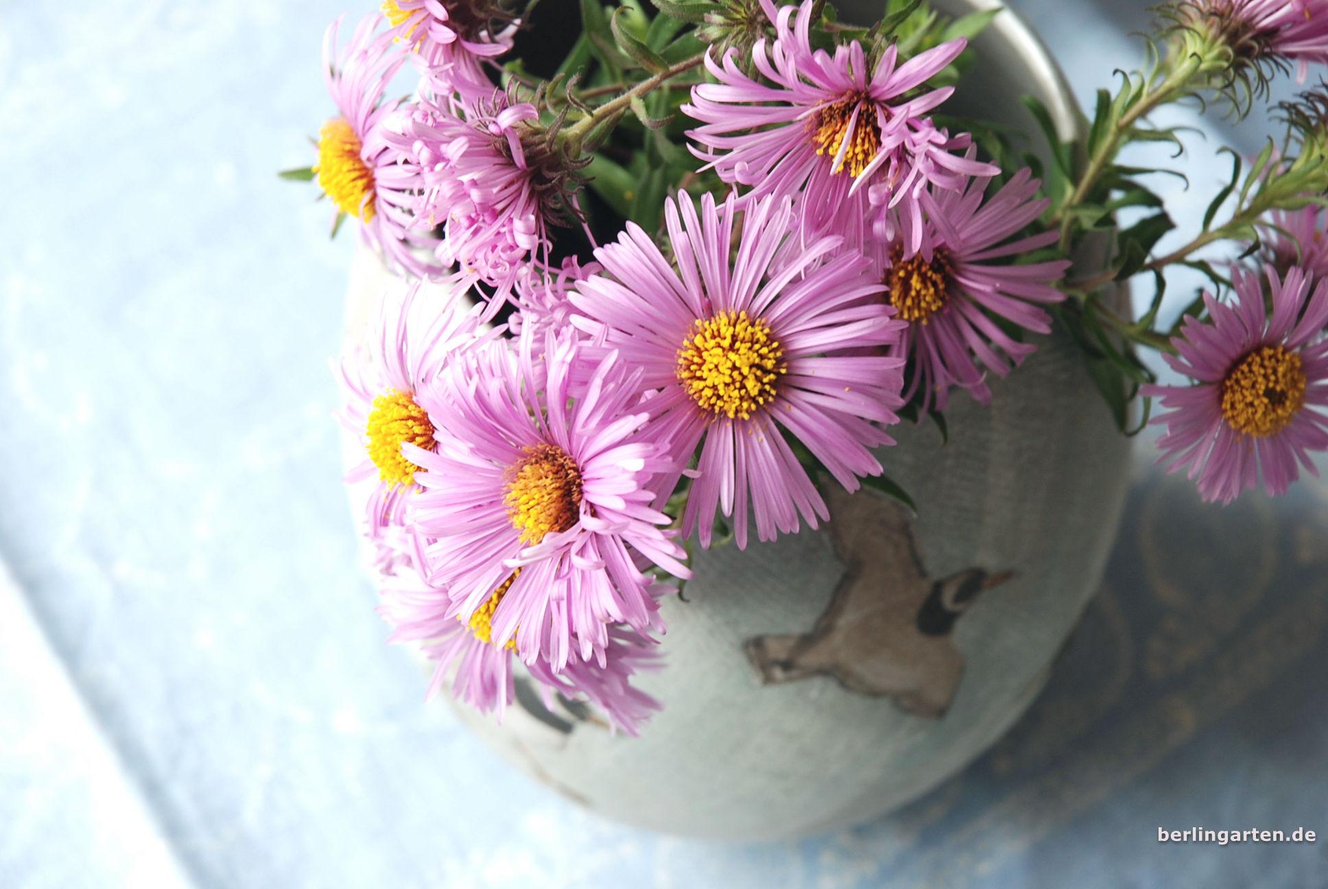 Aster in der Vase