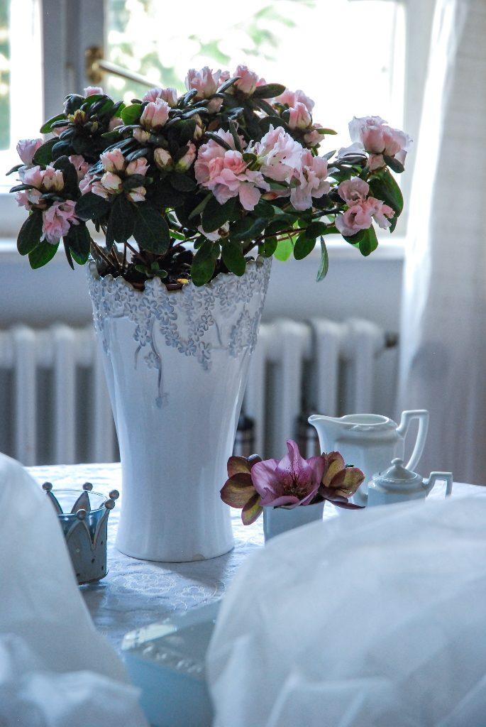 Der Azaleentopf passt wunderbar in eine Blumenvase mit größerer Öffnung