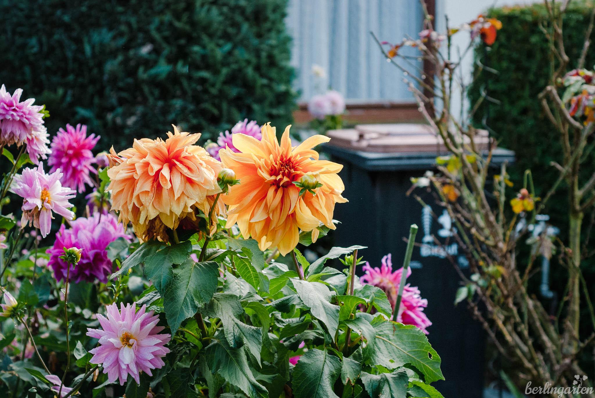 Biotonne im Garten