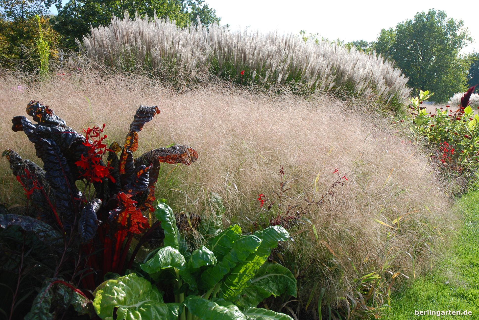 Willst du das Wesen einer Pflanzenzusammenstellung einfangen, geh dicht ran und begrenze den Blick