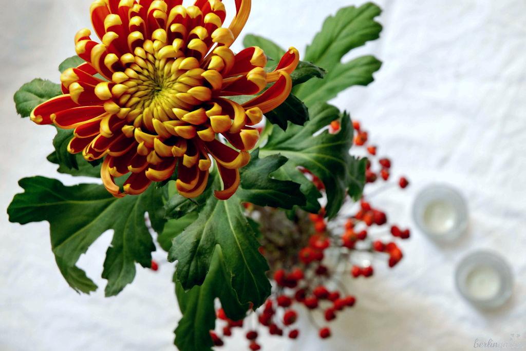 Rot-goldene Chrysantheme mit Hagebutte