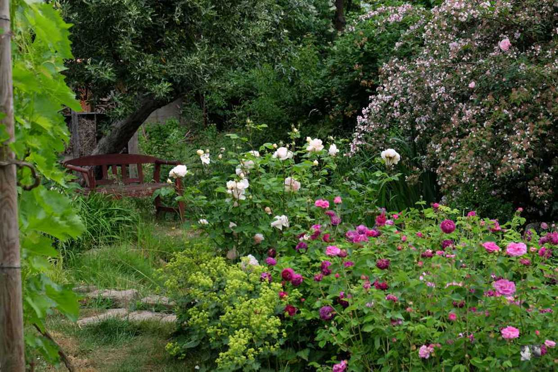 Interview Sabines Wunderschoner Selbstversorger Garten Berlingarten