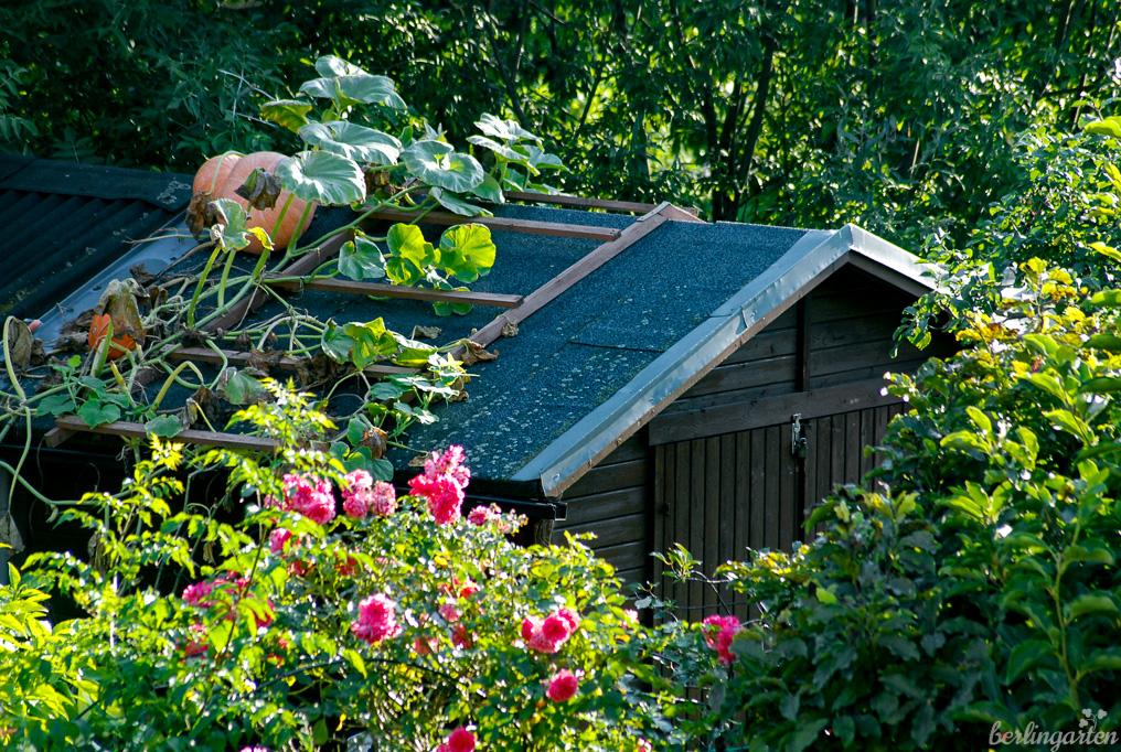 Auf kleinen Flächen ist es sinnvoll, die Höhe zu nutzen. Vertikal Gärtnern: Kürbis vom Dach