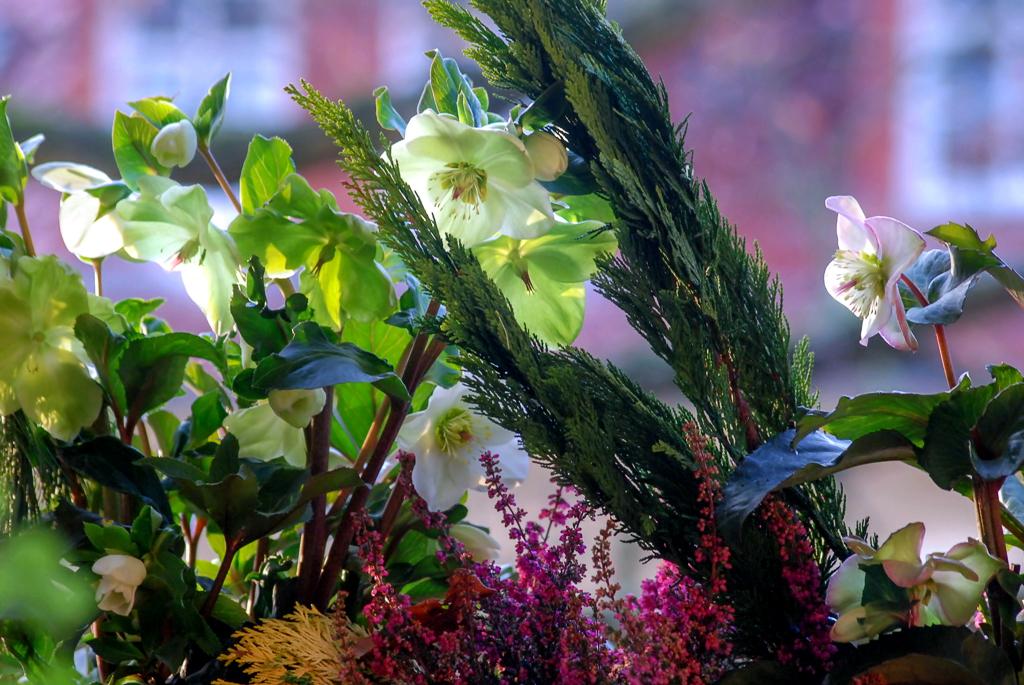 Lenzrosen mit Thuja und Heide geschmückt