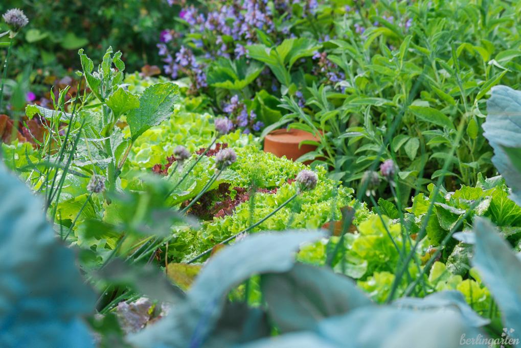 Mischkultur-Power: Kohl, Salate, Borretsch, Salbei, Schnittlauch, Erdbeeren