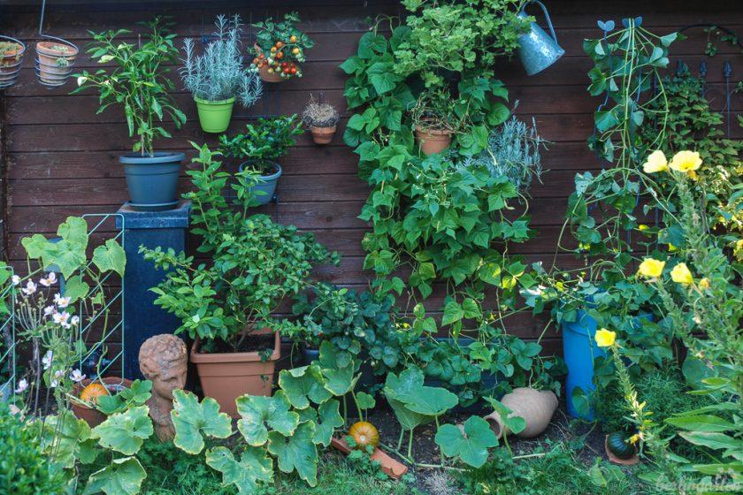 Mein Emsa City Garden
