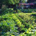 Fränkel Gemüsegarten