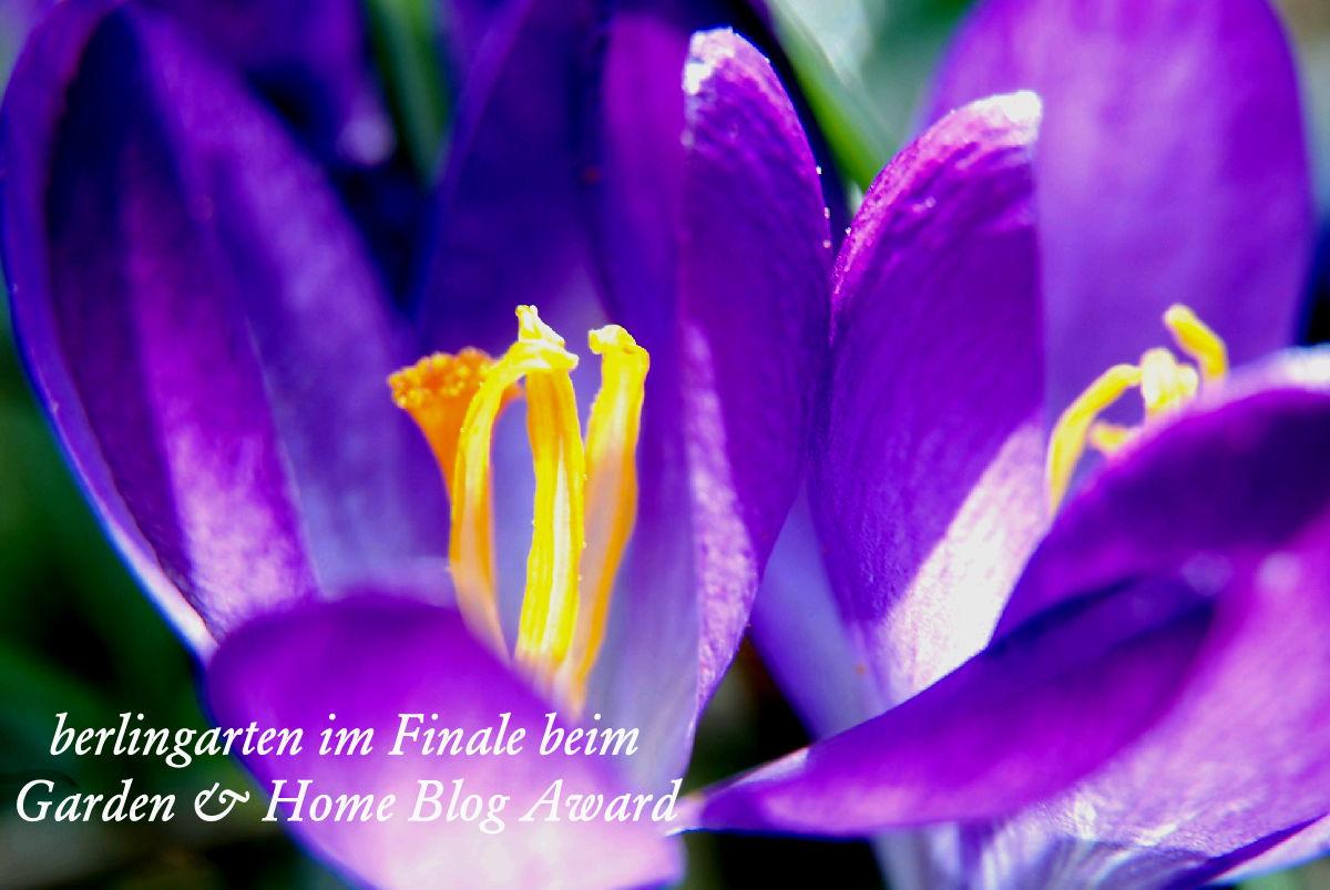 Bester Gartenblog: berlingarten Finalist beim Garden & Home Blog Award 2017