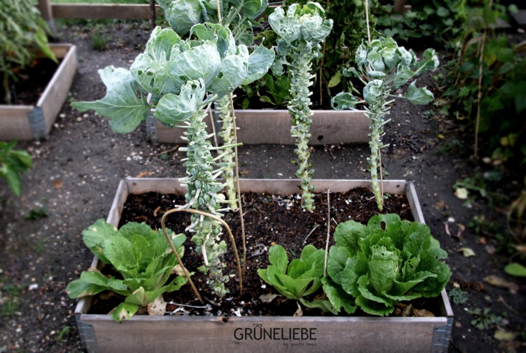 Gegartelt wird das ganze Jahr, geernet ebenso: Gartenarbeit im Oktober