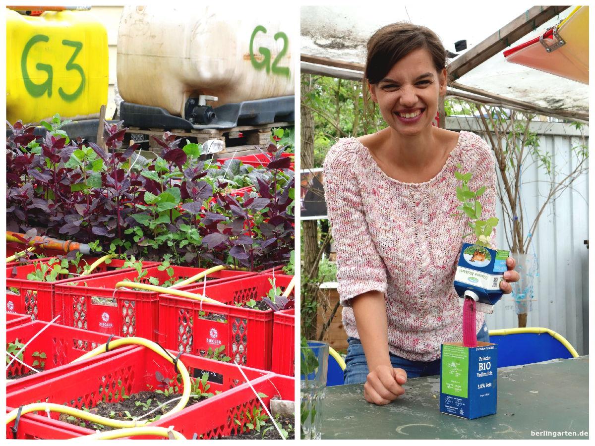 DIY Gartenfräulein Prinzessinnengarten