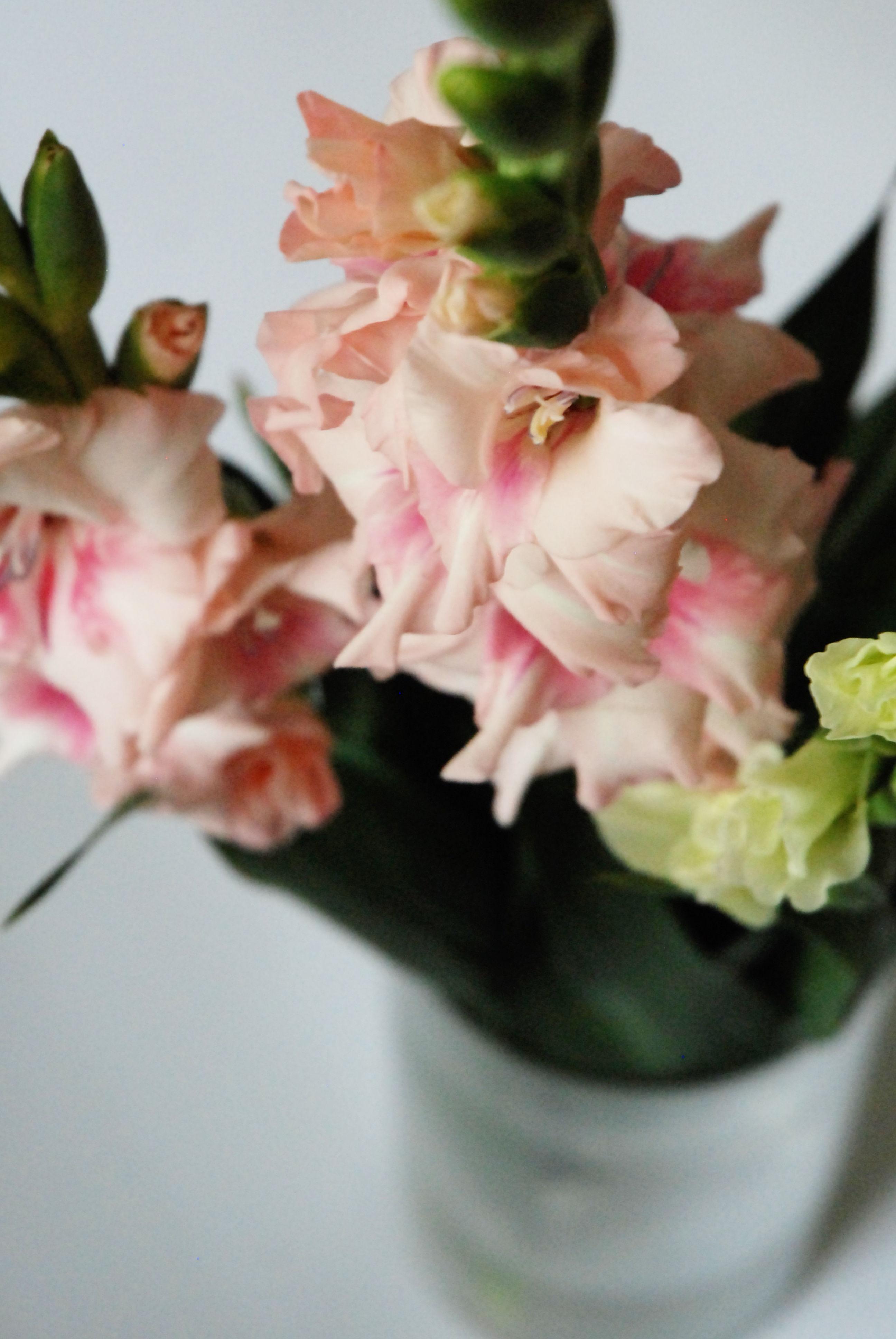 Gladiolen gibt es auch gefüllt und in zarten Farben