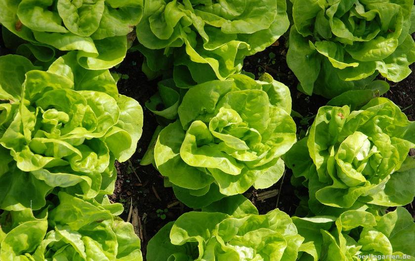 Begrenzt und als Muster fotografiert sieht dieser Salat fast wie Kunst aus