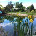 Iris Schwimmteich