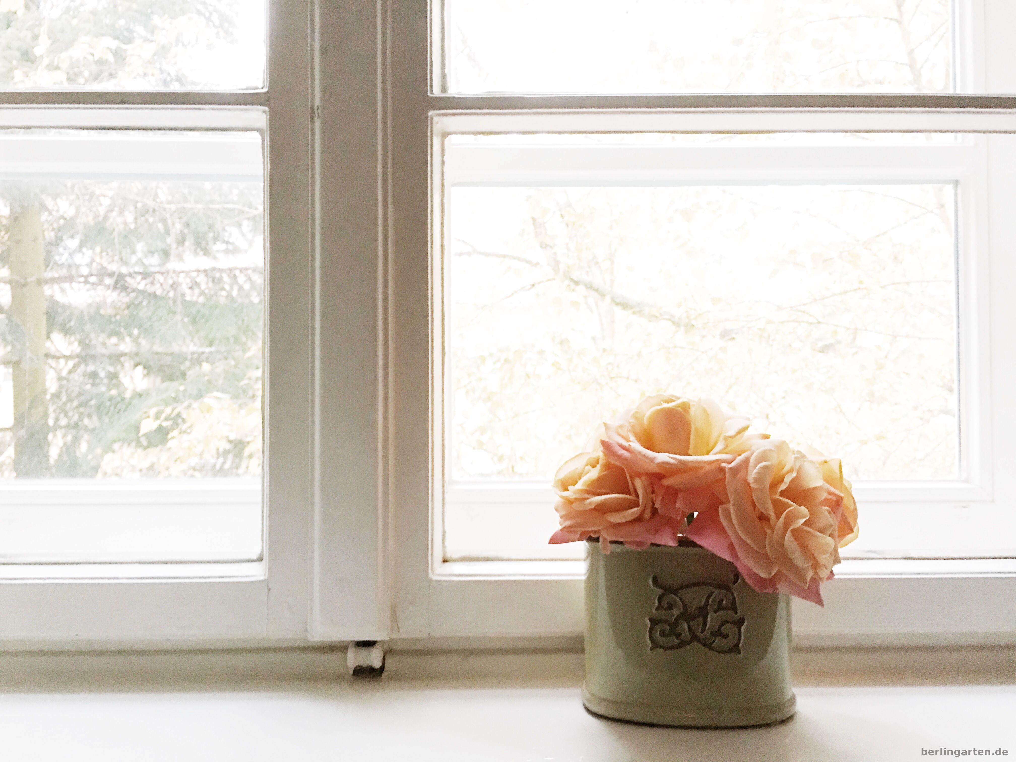 Trost und Freude: Die Rosen bringen Licht in die triste Jahreszeit