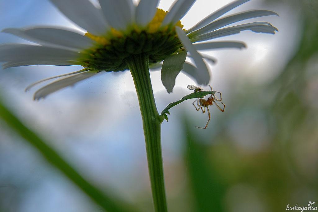 Pflanzen und Insekten: Es geht um die Diversität der Arten