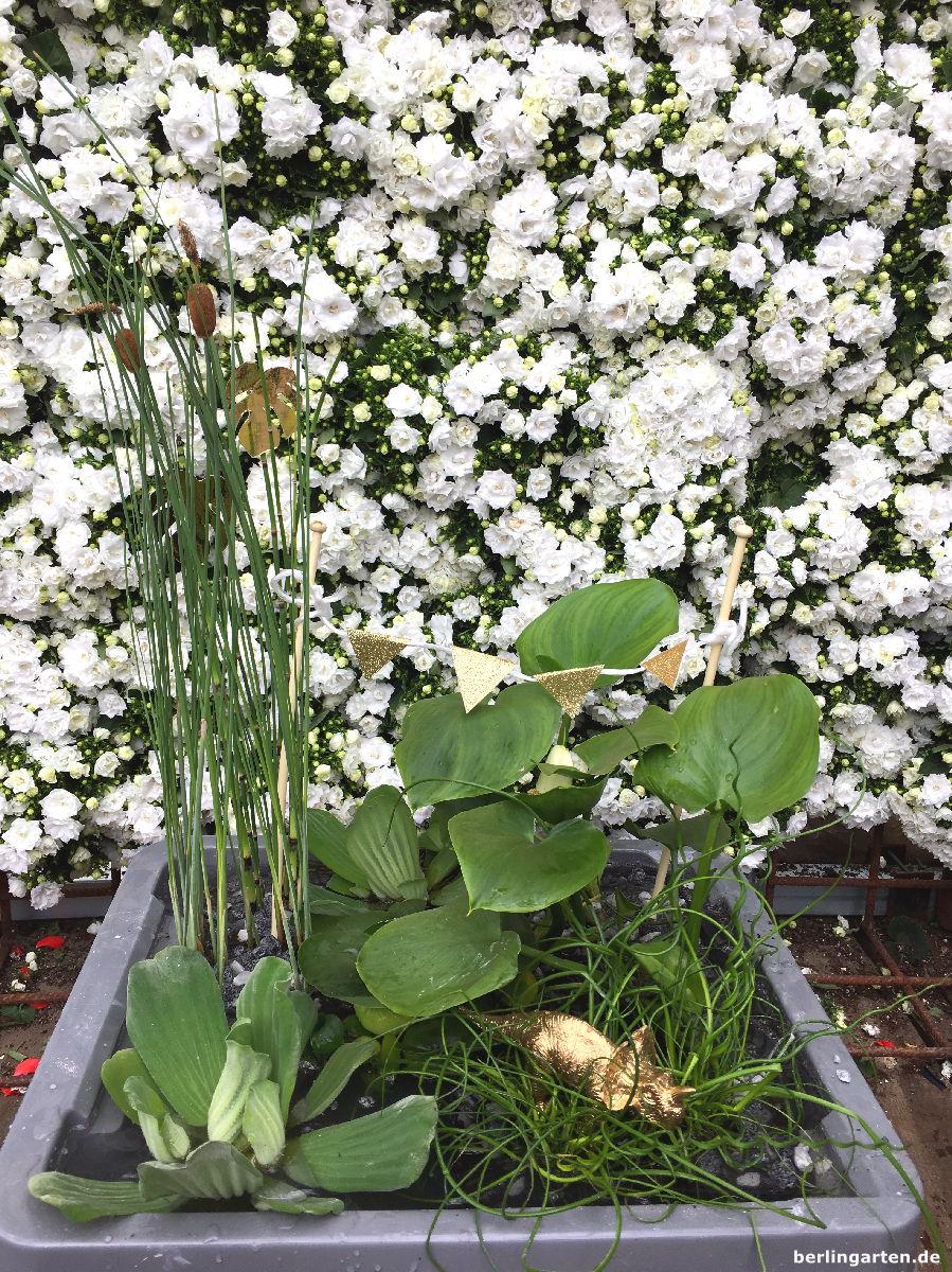 Mini Teich Bepflanzen Attraktiv Für Balkon Terrasse Kleine Gärten