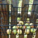 Äpfel zum Mitnehmen