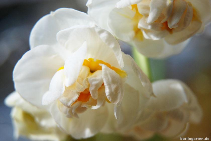 Narzisse Bridal Crown