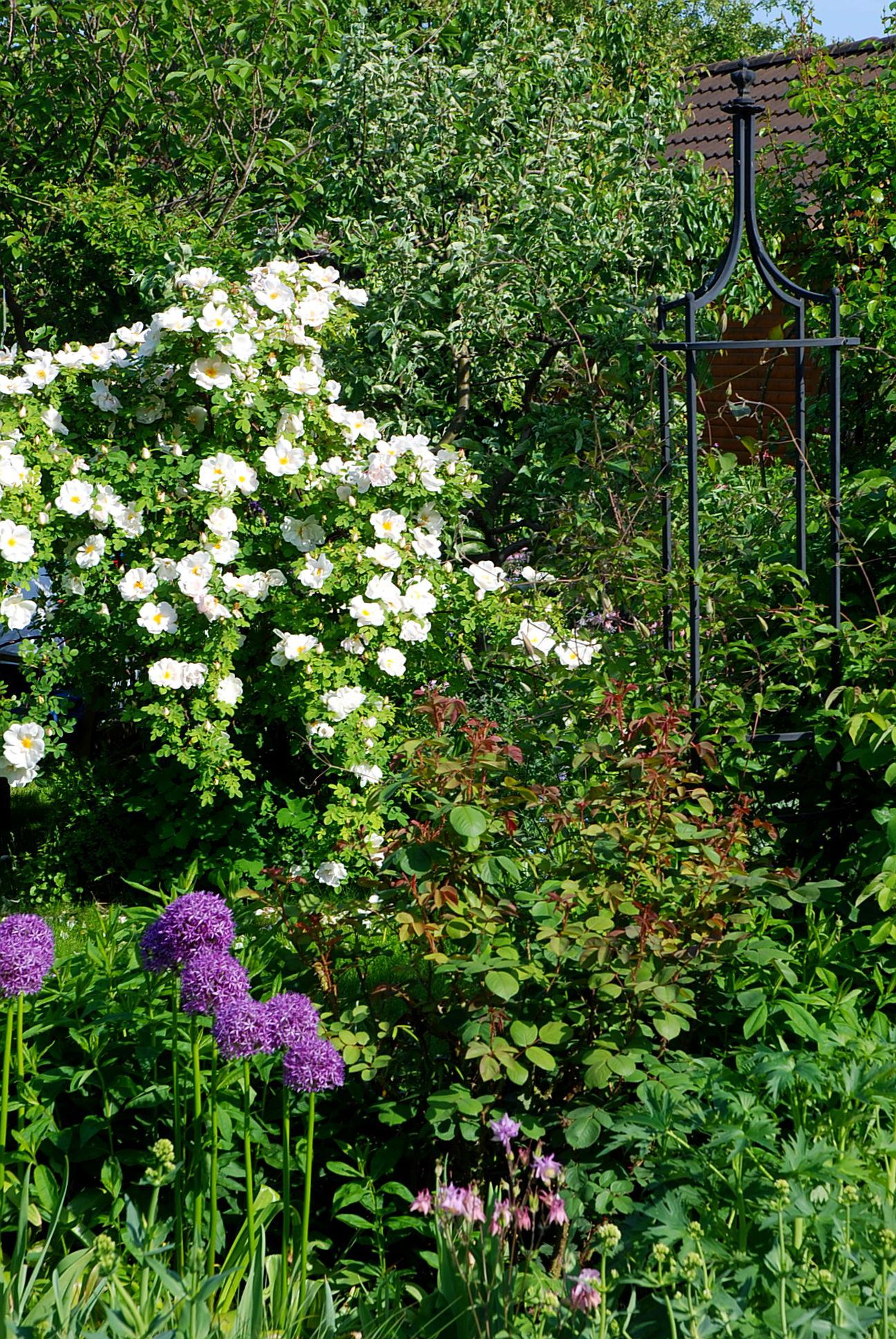 berlingartens Maigarten bei Mein schöner Garten