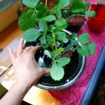 Pflanzen tauchen